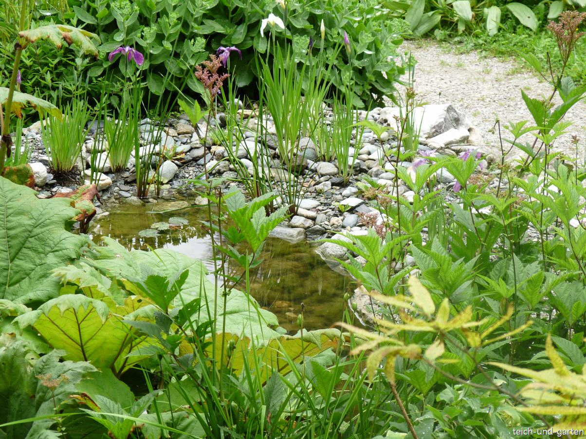 Teich und Garten natürlich gestalten